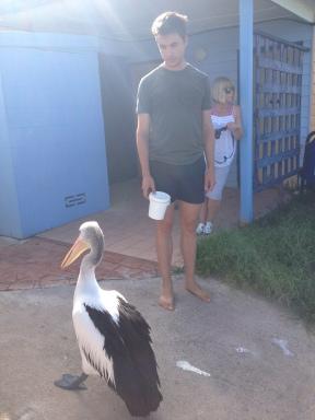 Untrustworthy pelican